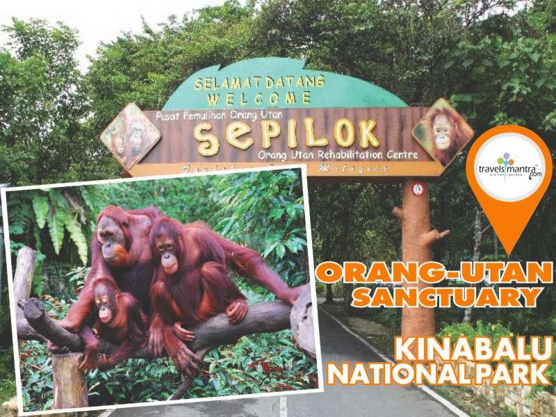 Orang-Utan Kinabalu National Park
