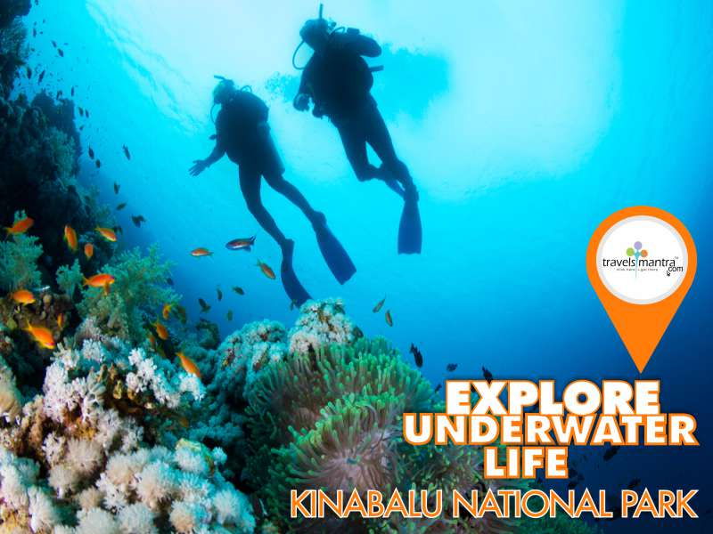 Underwater at Kinabalu National Park