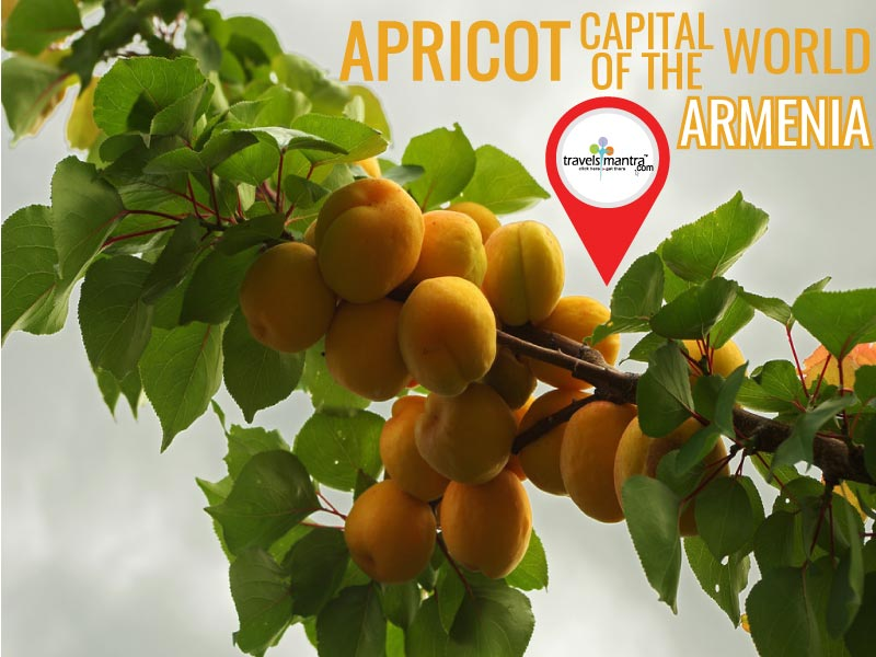Apricot Capital of the World