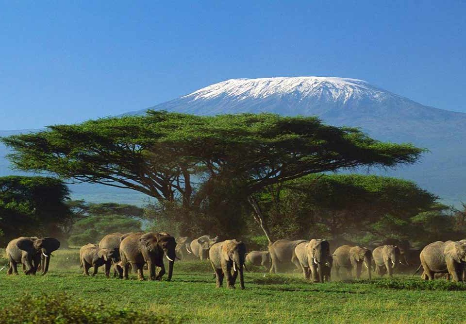 Kenya Main City Travels Mantra